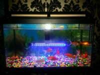 Gold fish and fish tank ..breadford