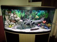 4 ft fluval venezia Bow fronted fish tank with cabinet. an extras.