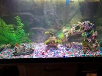 Fish Tank 120 Ltr with Stand tropical set up