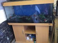 4 ft juwel fish tank