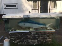 7 Pond Fish for sale