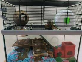 Gerbils x 2 and 2 x cages
