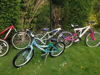 Selection of Family Bikes