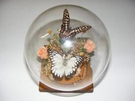 quirky ornament industrial gothic chic butterflies glass