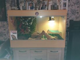 2 lizards and massive tank for sale