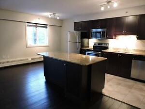 Downtown 2 Bedroom Condo for Rent