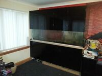 LARGE MARINE FISH TANK AND STAND