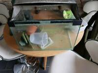 Small fish tank with heater
