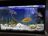 Complete set up aquarium with loads of extras and fish