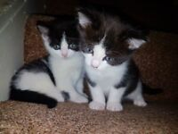 5 cute and playful kittens