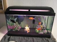 Fish Tank with Goldfish and Accessories