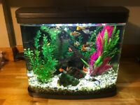 Aquarium with integral pump, filter, heater, lighting.