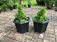 Garden plants in hexagonal pots. Collect Fulham