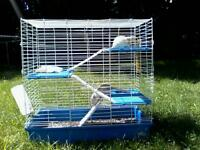 Rats et grande cage à donner / Rats and large cage to give away