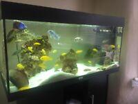 JUWEL RIO 180 Black fish tank/ Aquarium