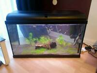 Fish tank with all accessories and fishes