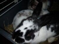 Fluffy baby bunnies
