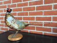 taxidermy cock pheasant