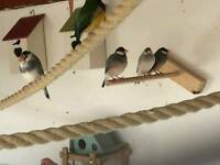 6 finches