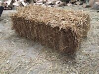 Conventional / Small Bale Wheat straw, ideal for horses, cattle, sheep