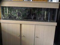 4ft fish tank (48x15x18)