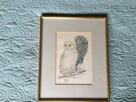 Snowy owl mounted and framed print