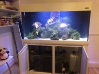 AQUA ONE 400 set up aquarium