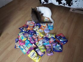 Cat Treats, Collars and Toys