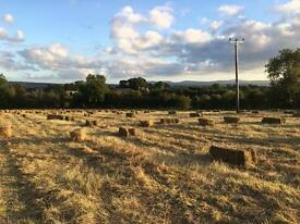 Hay - square bales