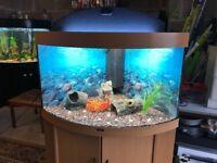 Corner Juwel fish tank 190l full set up with stand filter heater 2x t5 light gravel ornament lid