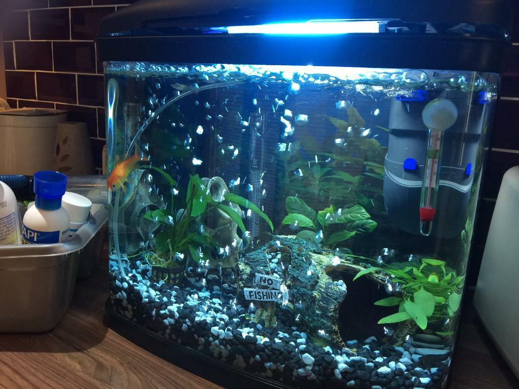 Fish xbox aquarium - Tropical Aquarium Fish Tank 64 Litres With Fish And Lots Of Extras Everything U