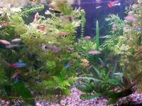 Guppies, Mollies, Platys and other fish