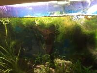 Tropical fish tank moss and bog wood different kinds