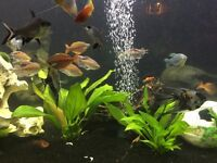 Assorted tropical fish for sale