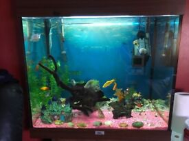 Fish aquarium and fish