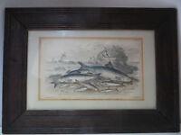 Antique Old Victorian Fish Print Framed. Maritime Print Nautical Fisherman