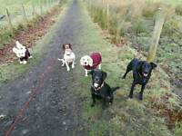 Tails in Motion Dog Walking & Pet Sitting Services