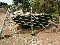 Galvanised farm gates ,in good condition at Polegate area UK