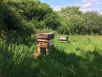Bee Hives With Bees For Sale