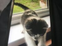 Ready now 8 week old kittens male and females got gingers or tabbies or multi etc £100
