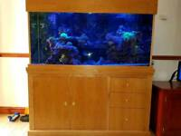 Marine or tropical fish tank and oak unit 5ft