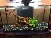 Small fish tank for Sale - Fish and all other Equipment Included