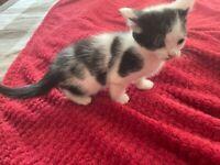 Adorable kitten - last boy