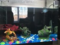 10 gallon fish tank with heater and filter.