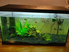 2 x 105 litre fish tanks with fish