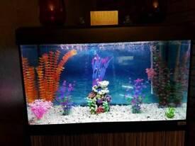 125 litre fishtank