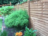 wanny lap fence panels and feather edge gates for sale