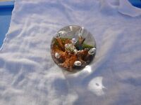 FOR SALE CAITHNESS SEA DANCE GLASS PAPERWEIGHT