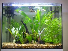 30 Gallon Aquarium with fish!