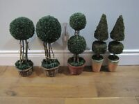 Various Topiary and Christmas Trees